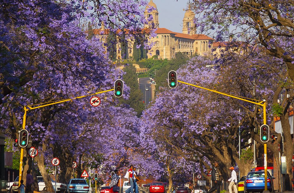 All About Africa; Pretoria