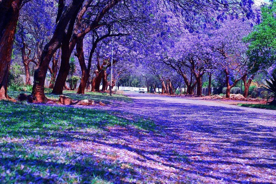 All About Africa; Bulawayo, Zimbabwe